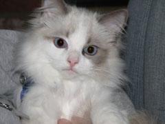 cute-kitten-2
