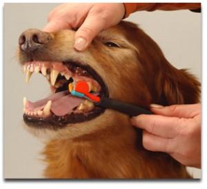 dog-brushing1