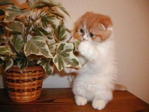 cat-plant-2