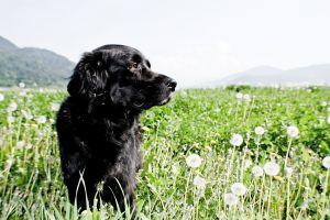 dog-outside