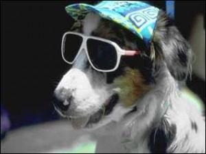 dog-sun