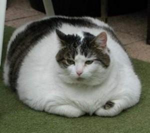 fat-cat-2