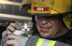 firefighter-cat