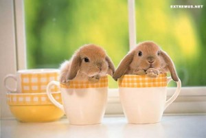 rabbits-cute