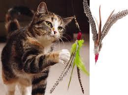 cat-fishing