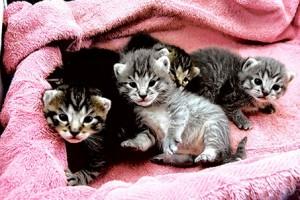 kitten-three-weeks