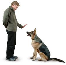 man-teaching-dog