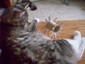 cat-home-made-toy