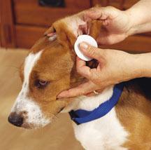 dog-ears