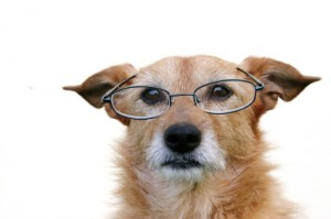 dog-glasses
