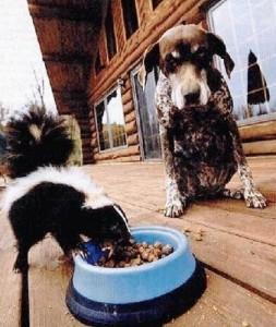 dog-skunk