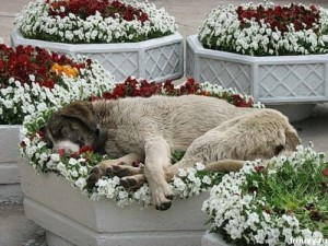 dog-sleeping-flowers