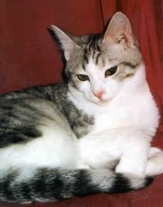 older-cat