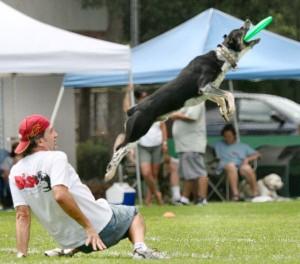 dog-disc
