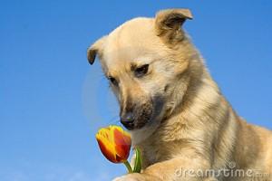 dog-flower1