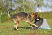 dog-fly-ball