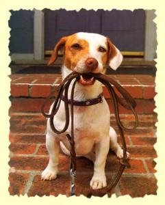 dog-holding-leash