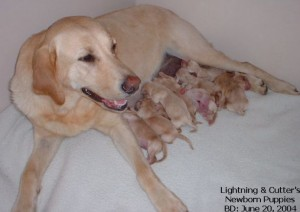 dog-newborn-puppies