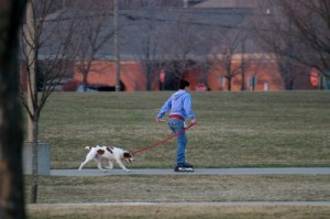 dog-rollerblading