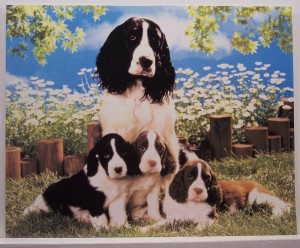 dog-with-puppies