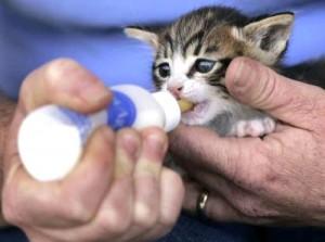 kitten-bottle