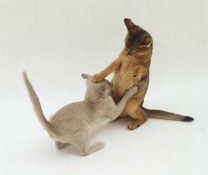 tom-cats