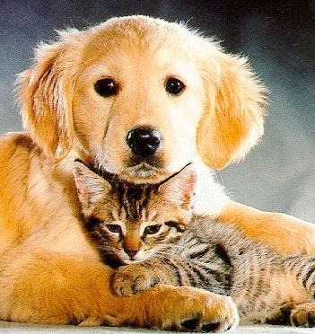 Can cats and dogs live together? | The Pet Product Guru