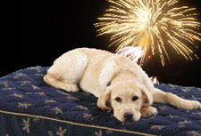 dog-fireworks