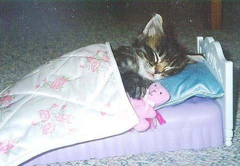 KITTEN-IN-BED.jpg