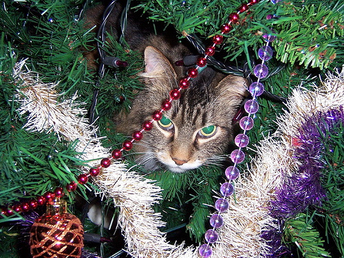 how to keep your cat from climbing trees