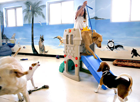 doggie day care the pet product guru dog day care 450x327