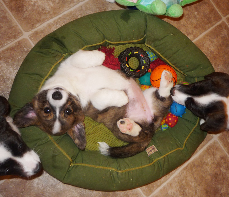 Pet supplies the pet product guru part 83 for Cat toys for when you re not home
