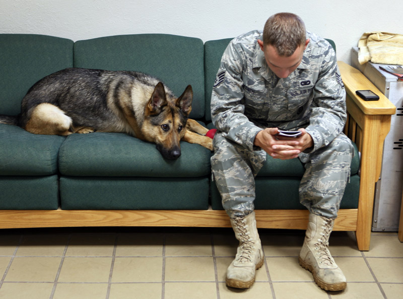 How Many Military Dogs Are Currently In Service
