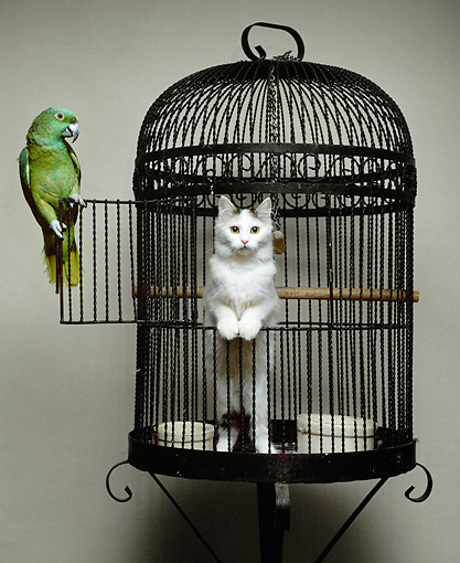 Can You Have A Budgie And A Cat