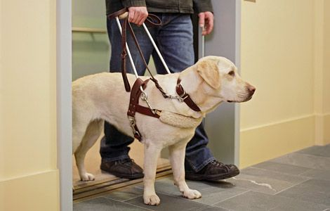 Seeing Eye Dog Images a Seeing Eye Dog is