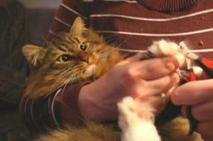 CAT NAILS TRIMMED