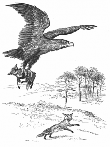 hawk dog