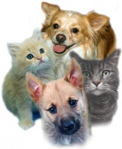 DOG CATS
