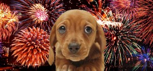 DOG FIREWORKS