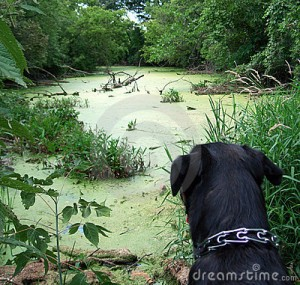 DOG GREEN WATER