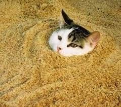 CAT SINKING