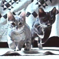 FRIGHTENED CATS
