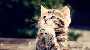 KITTEN PRAYING