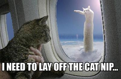 cat litter deals