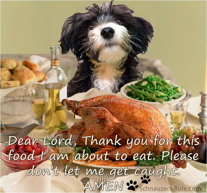 Five Great Thanksgiving Treats for Your Dog | The Pet Product Guru