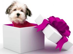 OLDER DOG CHRISTMAS