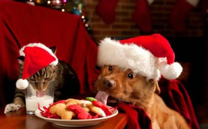 DOG CAT CHRISTMAS