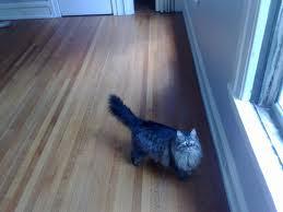 Cat EMpty