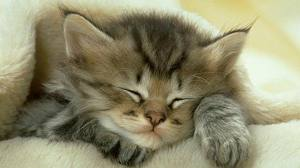 CAT SLEEP 2