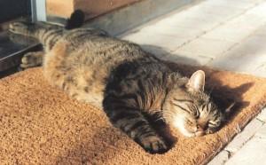 CAT SLEEPING IN SUN